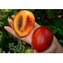 Sementes Fruta Tamarilho Tomate De Arvore Tamarillo P Mudas