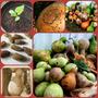 15 Sementes De Porongo (cabaça)