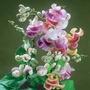 5 Vigna Caracalla-trepadeira Caracol-exótica