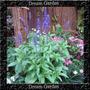 Salvia Farinacea Victoria Blue - Sementes Para Mudas