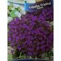 Lobélia Azul 6000 Sementes Para Mudas Flores Jardim Vasos