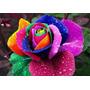 90 Sementes De Rosas Exóticas 9 Tipo De Rosa.10 De Cada Cor