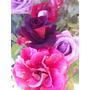 Kit Rosas Midi Com 3 Mudas-rosas Especiais Hibridas-lindas