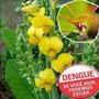 100g Sementes Crotalaria Flor Contra A Dengue Frete Grátis!!