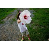 Sementes Hibisco Gigante Hibiscus Moscheutos Branco P/ Mudas