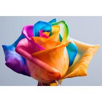 20 Semente Rosa Exótica Arco-íris + Frete Grátis