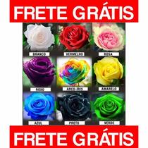 45 Sementes Rosas Arco Iris, Azul, Verde, Amarela, Envio Já