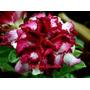 Adenium Obesum 22 Sementes Raras (22 Cores) Rosa Do Deserto