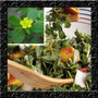 Beldroega Azedinha Baby Leaf Suculenta Sementes P/ Hortaliça