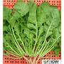 Sementes De Rúcula Para Salada Baby Leaf Frete Grátis
