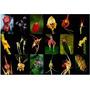 Orquídea De Animais Raros Mundo Mix 10 Sementes 18 Espécies