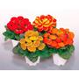 Calceolaria - Sapatinho De Vênus Mix Sementes Flor P/ Mudas