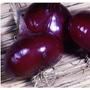 5 Sementes De Cebola Red Creole Chata Roxa - Frete Grátis !