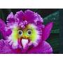 20 Sementes Orquídeas Coruja ,vasos, Jardim, Decoração