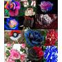 50 Semente De 10 Tipos De Rosa Exóticas E Raras