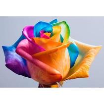 20 Sementes Rosa Arco Iris (colorida) #mzx4
