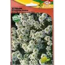 10 Pacote De Sementes Alyssum Flor Do Mel