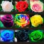 10 Sementes De Rosas Variadas (exóticas) 9 Tipos