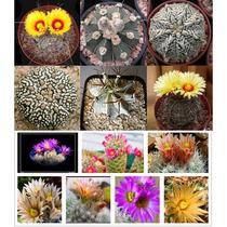 10 Sementes De Cacto Kit 1 - Frete Grátis/orquídea/raros