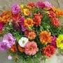 Sementes De Flor Onze Horas 1500 Sementes + ***brindes***