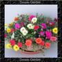 Onze Horas Dobrada Sortida 3300 Sementes Importada Flor Muda