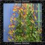 Ipomoea Lobata - Trepadeira Sementes Flor Para Mudas