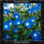 Trepadeira Ipomoea Ipomeia Blue Ocean Mix Sementes Flor