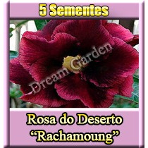 Rosa Deserto Rachamoung Adenium 0h0 Semente Flor Para Mudas