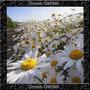 Margarida Branca Leucanthemum Sementes Flor P Muda