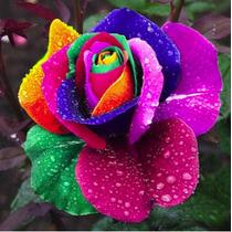 50 Sementes De Rosa Arco-íris, Jardim, Vasos