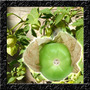 Tomatillo Green - Physalis Tipo Tomate - Sementes P/ Mudas