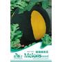 Sementes Da Melancia Chinesa Exótica Preta E Amarela