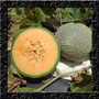 Melão Imperial Orgânico - Sementes Frutas Para Mudas