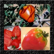 Tomate Morango - Sementes Fruta Legumes Para Mudas