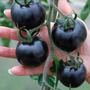 30 Sementes De Tomate Cereja Preto + Brinde