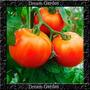 Tomate Super Marmande Gaucho Maça Sementes Para Muda