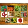 Kit Pimenta Especiais - Com 11 Variedades