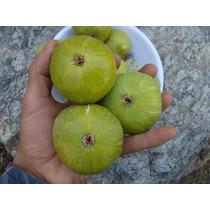 Figo Gigante Patlican Verde Sementes Frutas Para Mudas