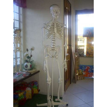 Esqueleto Humano 1,68m Luxo - Gd0101im