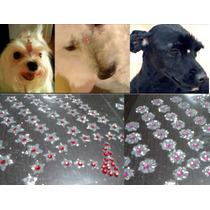 Bindi Piercing Strass 100 Adesivos Pelo Pet Cachorro Gato