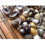 Conchas Do Mar Natural Para Artesanato/decoração (2 Kg )