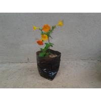 Saquinhos Sacos Germinação Para Mudas Plantas Sementes