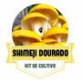 Shimeji Dourado - Kit Para Cultivo De Cogumelos Comestíveis