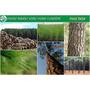 Mudas Pinus Elliottii Excelentes Resina/reflorestamento