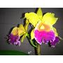 Kit 5 Orquídeas Variadas / Jardim Vertical Decoração