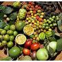 Sementes (frutiferas Da Amazonia)biriba/andiroba/araça/etc.)