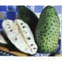 Muda De Graviola Frutífera E Medicinal