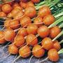 100 Sementes De Cenouras Redondas Mini Baby Carrots Orgânica