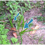 Herbicida Para Gramados ( Mata Tiririca)