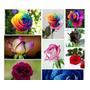 180 Sementes Rosas Exóticas 9 Tipos E Cores - ( Importada )